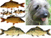 Insight into Carp Feeding Habits - last post by GC